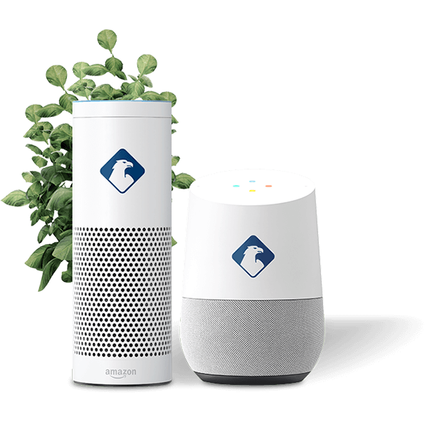 AMazon Echo und Google Home